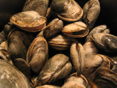 Steamed Clams